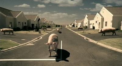 Citroën-Werbung: Ein Schwein steht vor einem Stoppschild