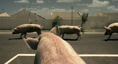 Citroën-Werbung: Ein Schwein wartet auf andere Schweine