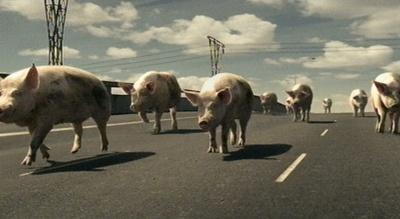Citroën-Werbung: Fließender Schweineverkehr auf vierspuriger Straße
