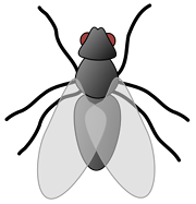 Bild einer Fliege